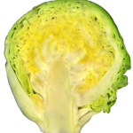 554px-Brussel_sprout